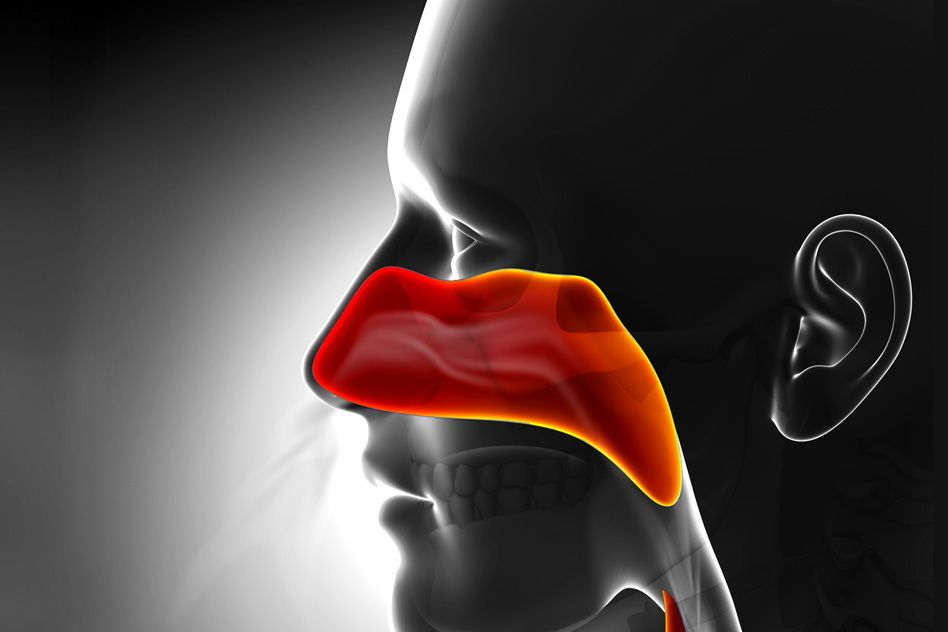 A computer generated scan of a human's sinuses are highlighted in red.