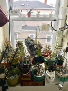 a collection of plants in a window.