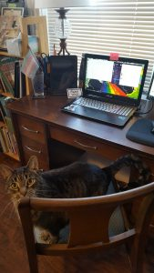 A cat sits on a desk chair in front of a laptop.